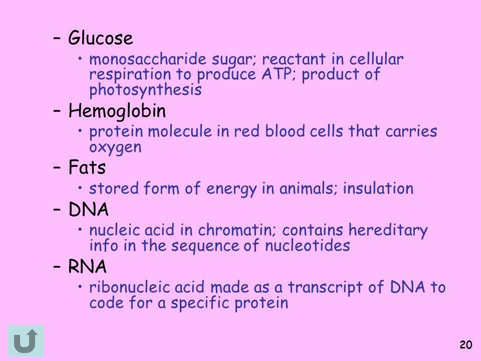 Glucose Hemoglobin Fats DNA RNA