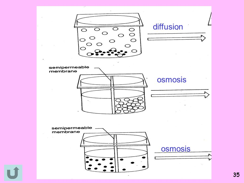 does diffusion allow osmotic pressure to be generated Colloid osmotic pressure the osmotic pressure generated by  pores formed by aquaporins that allow water but  diffusion down concentration and.