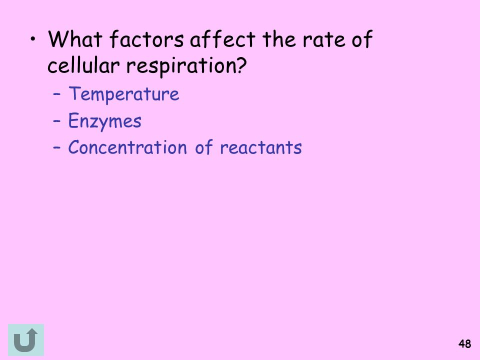 What factors affect the rate of cellular respiration