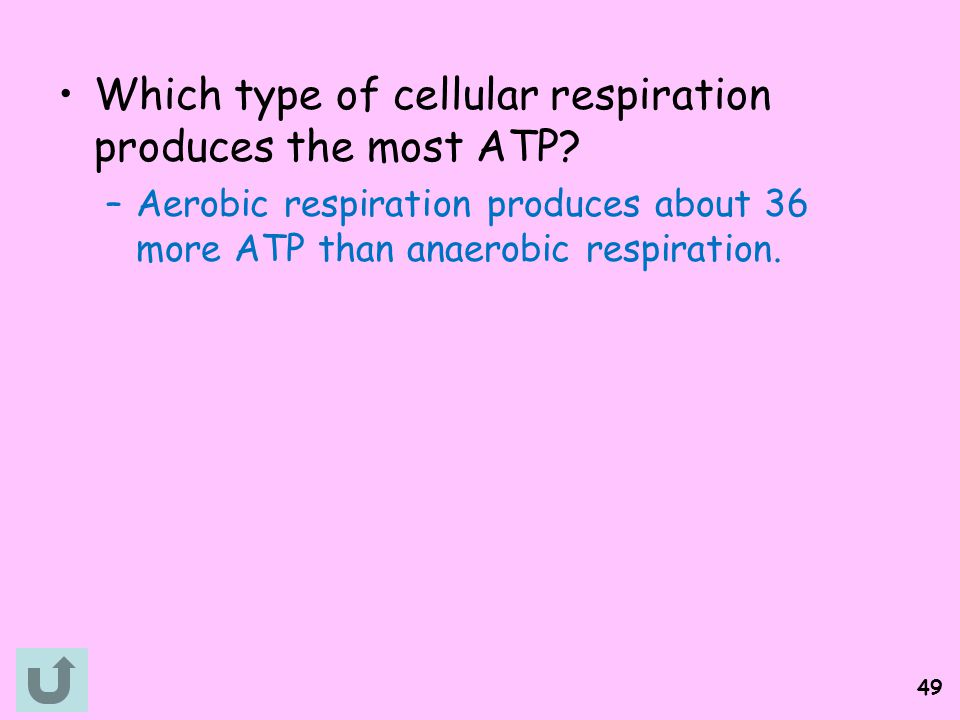 Which type of cellular respiration produces the most ATP
