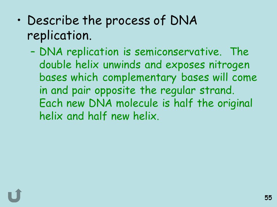 Describe the process of DNA replication.