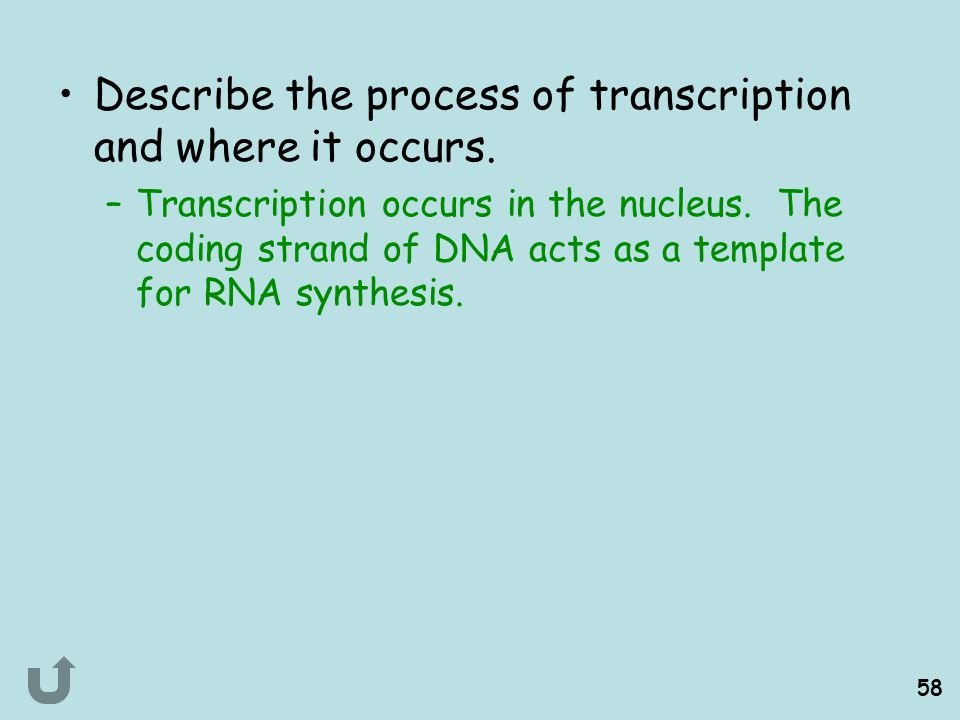 Describe the process of transcription and where it occurs.
