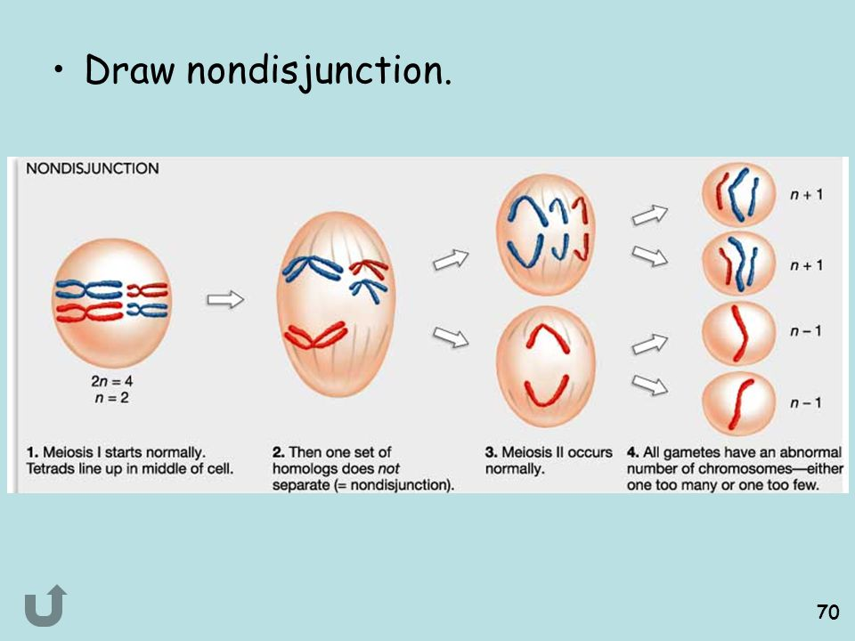 Draw nondisjunction.