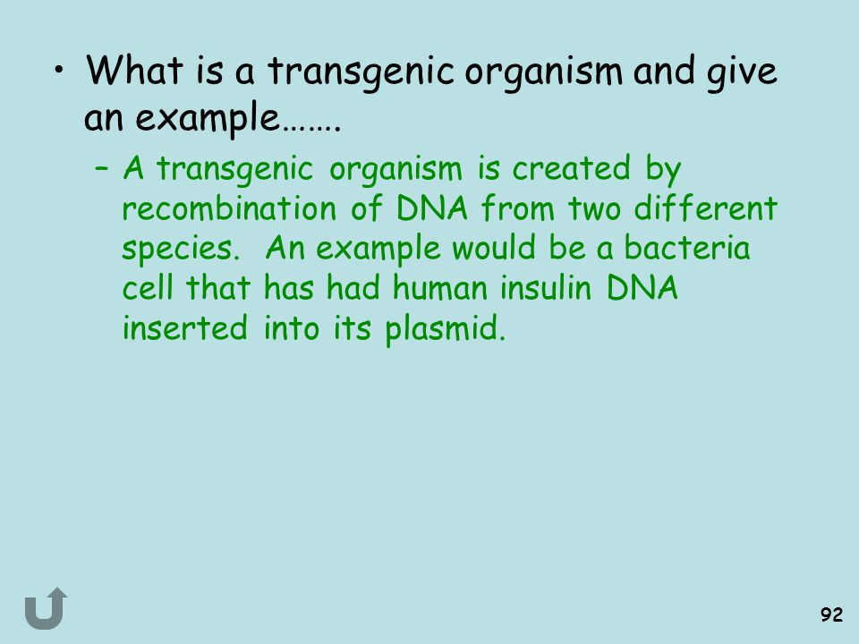What is a transgenic organism and give an example…….