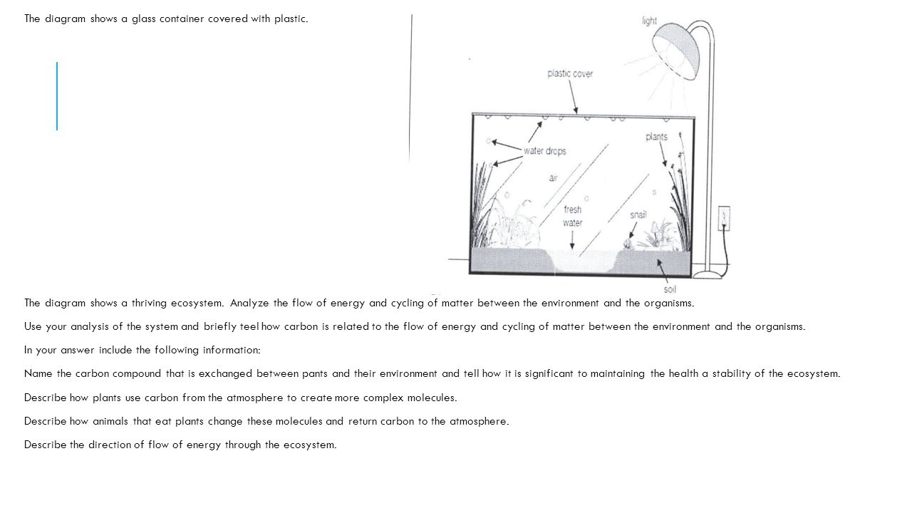 Eoc by essential standard ppt video online download 18 the diagram shows ccuart Image collections