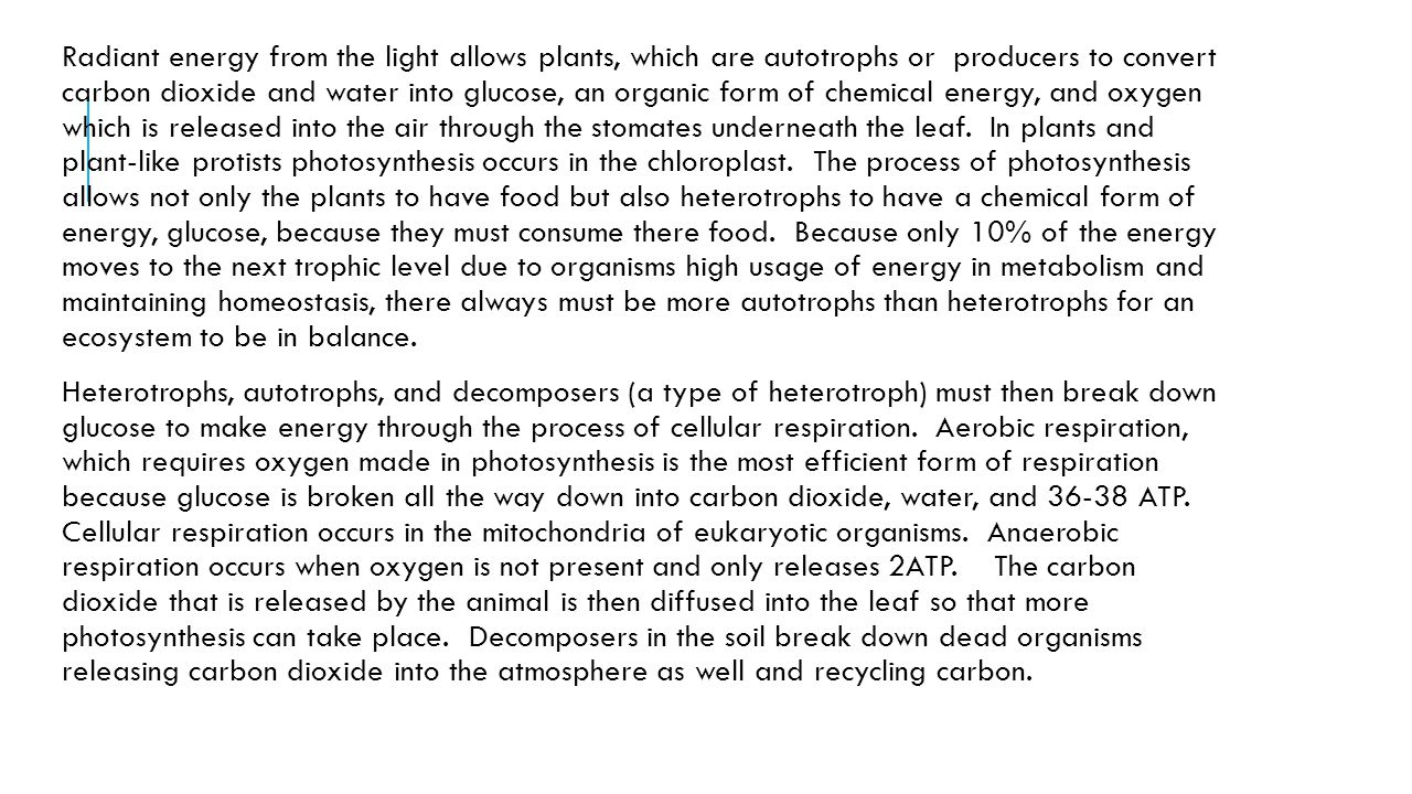 Radiant energy from the light allows plants, which are autotrophs or producers to convert carbon dioxide and water into glucose, an organic form of chemical energy, and oxygen which is released into the air through the stomates underneath the leaf. In plants and plant-like protists photosynthesis occurs in the chloroplast. The process of photosynthesis allows not only the plants to have food but also heterotrophs to have a chemical form of energy, glucose, because they must consume there food. Because only 10% of the energy moves to the next trophic level due to organisms high usage of energy in metabolism and maintaining homeostasis, there always must be more autotrophs than heterotrophs for an ecosystem to be in balance.