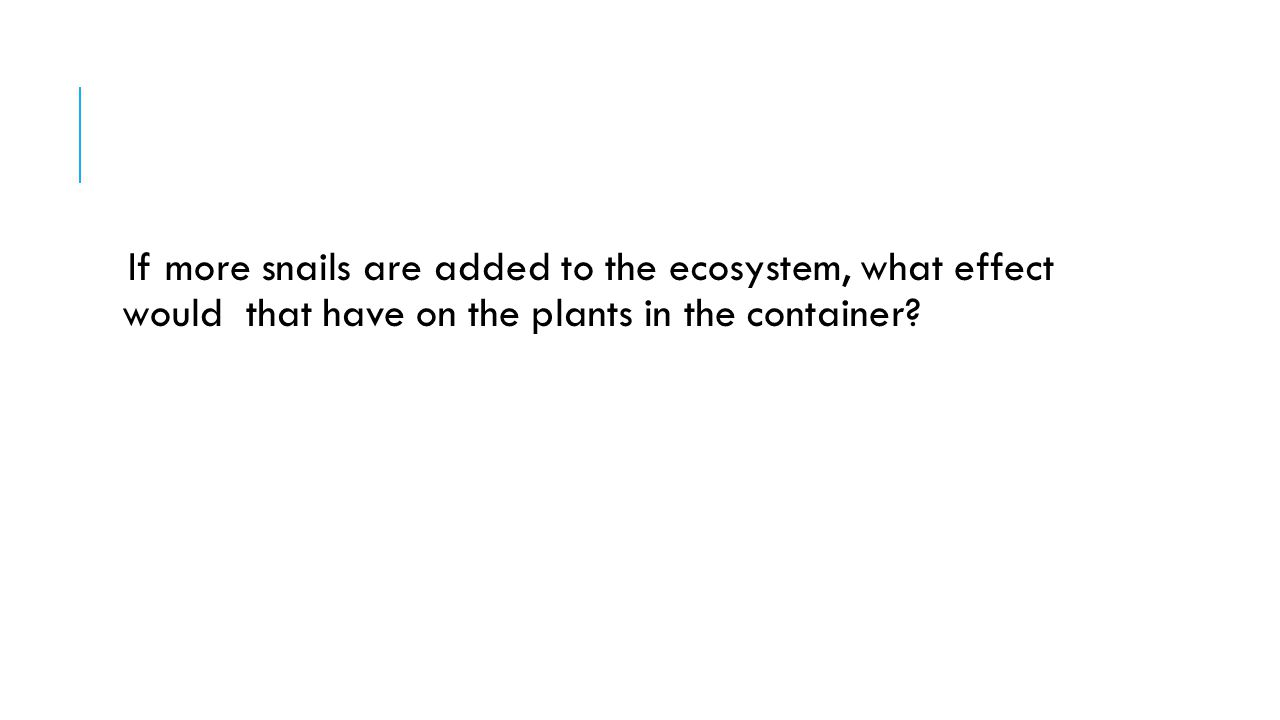 If more snails are added to the ecosystem, what effect would that have on the plants in the container