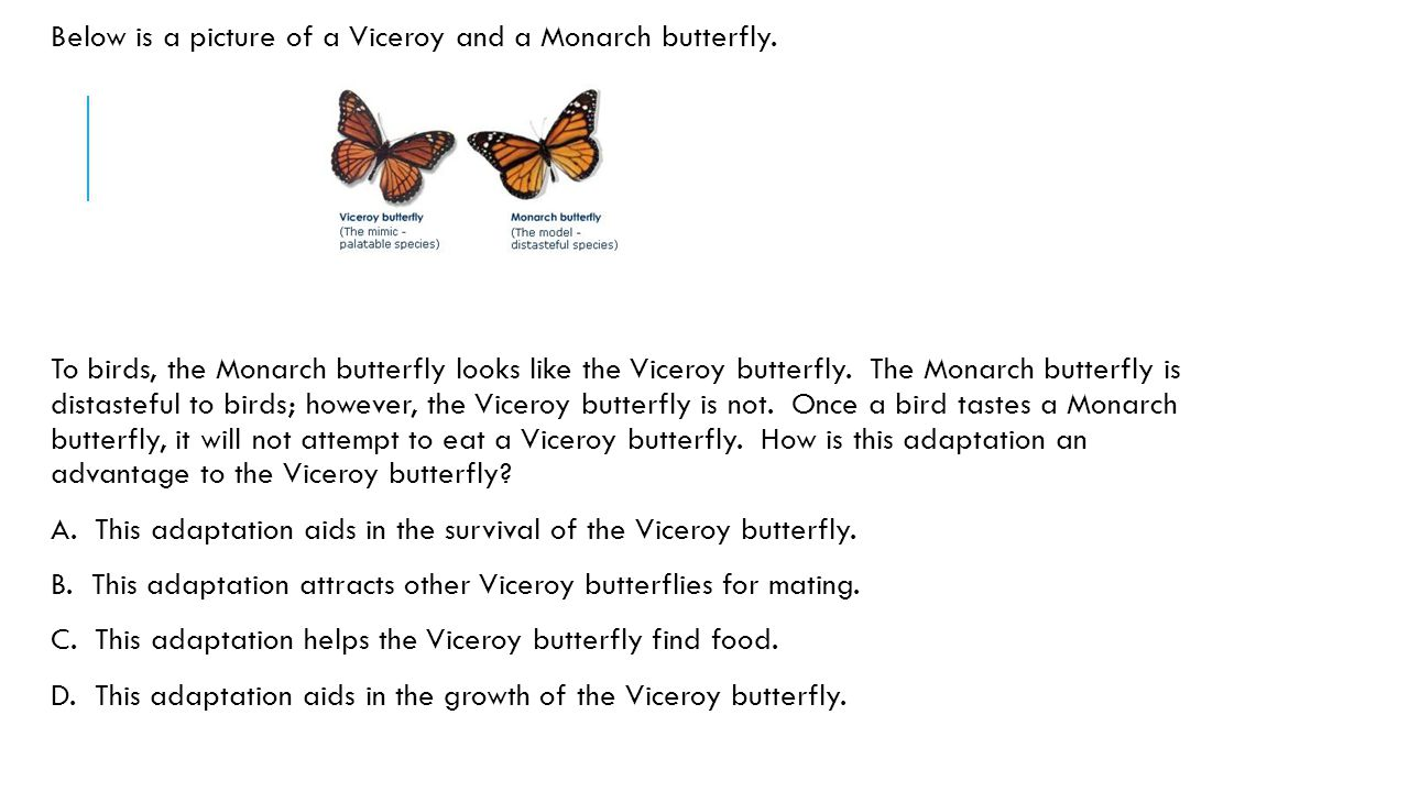 Below is a picture of a Viceroy and a Monarch butterfly.