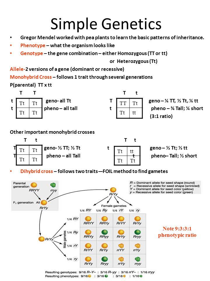 Note 9:3:3:1 phenotypic ratio