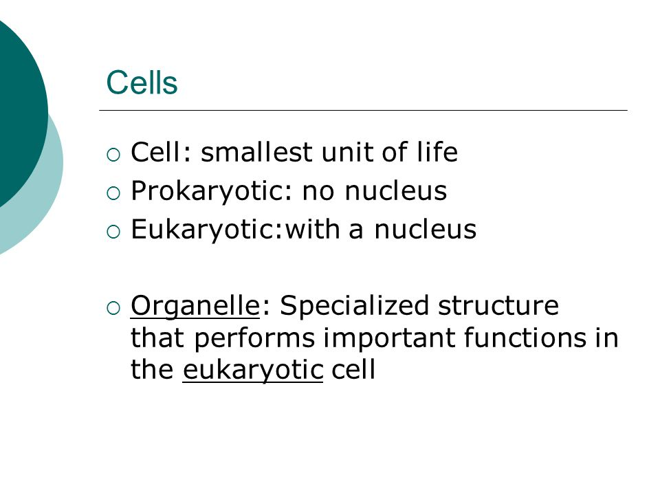 Cells Cell: smallest unit of life Prokaryotic: no nucleus