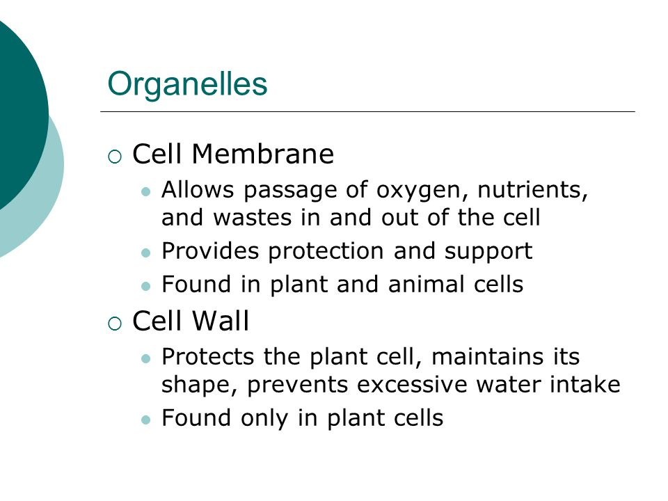 Organelles Cell Membrane Cell Wall