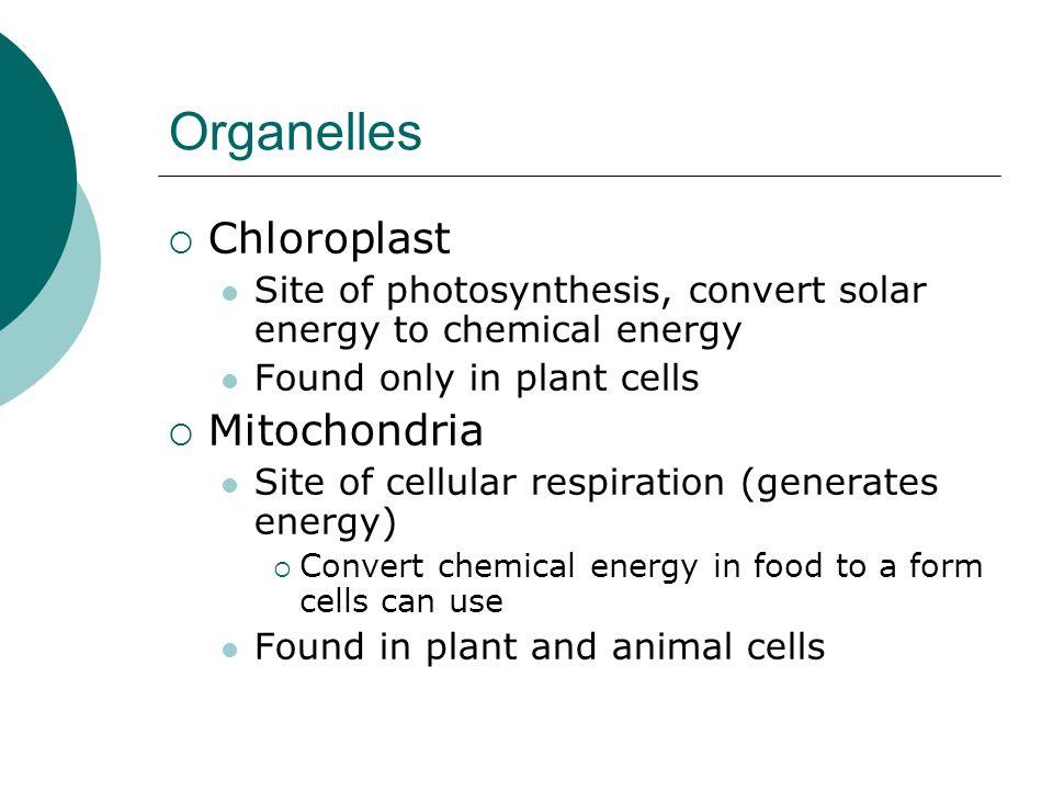 Organelles Chloroplast Mitochondria