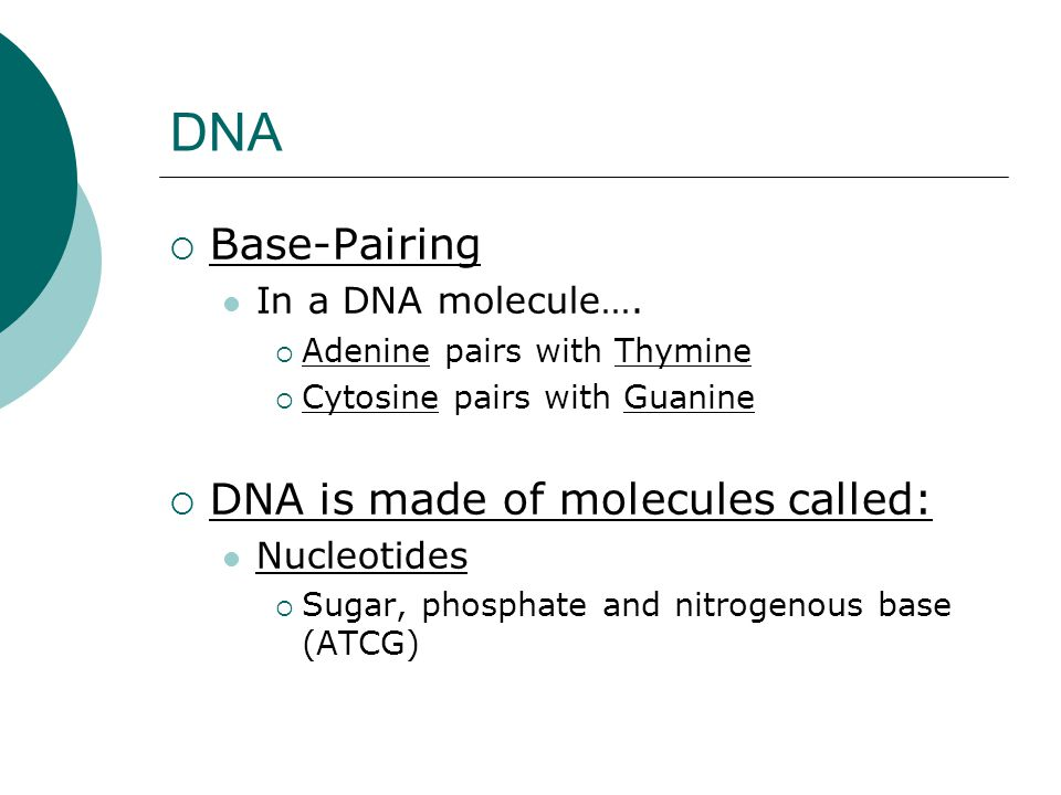 DNA Base-Pairing DNA is made of molecules called: In a DNA molecule….