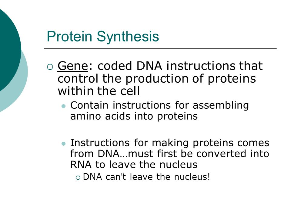 Protein Synthesis Gene: coded DNA instructions that control the production of proteins within the cell.