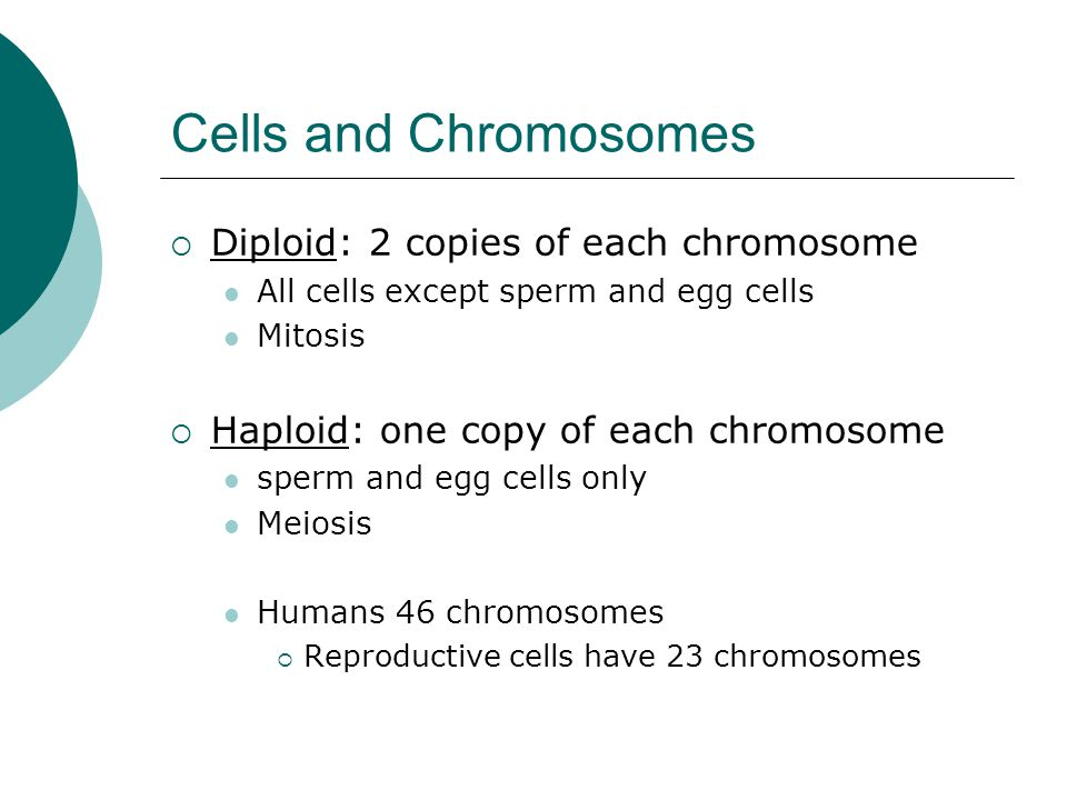Cells and Chromosomes Diploid: 2 copies of each chromosome