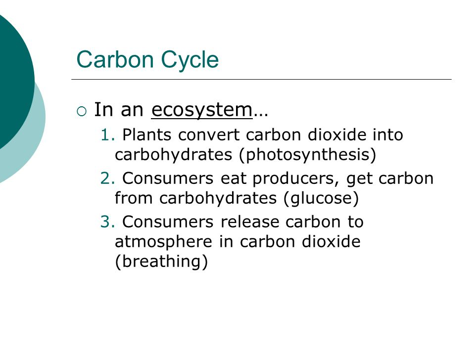 Carbon Cycle In an ecosystem…