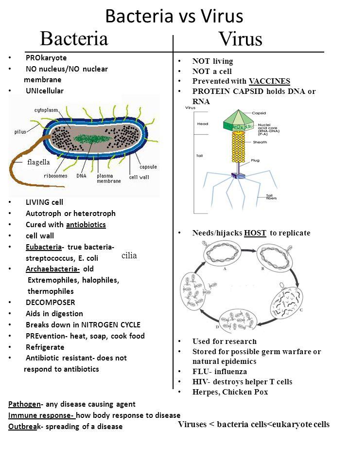 Bacteria vs Virus Bacteria Virus