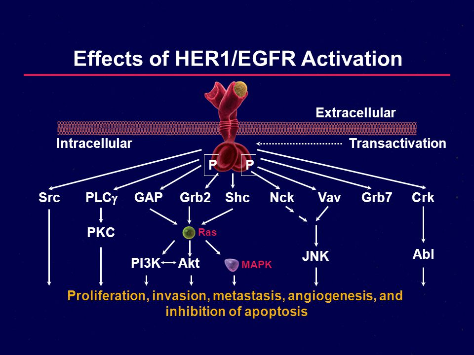 Effects of HER1/EGFR Activation