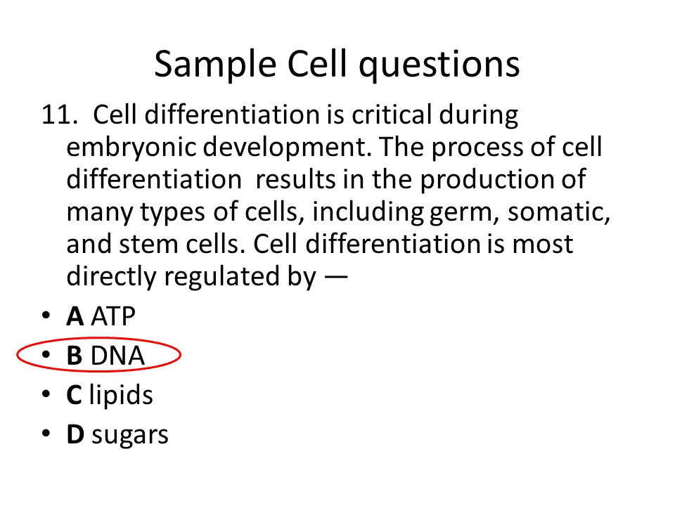 Sample Cell questions