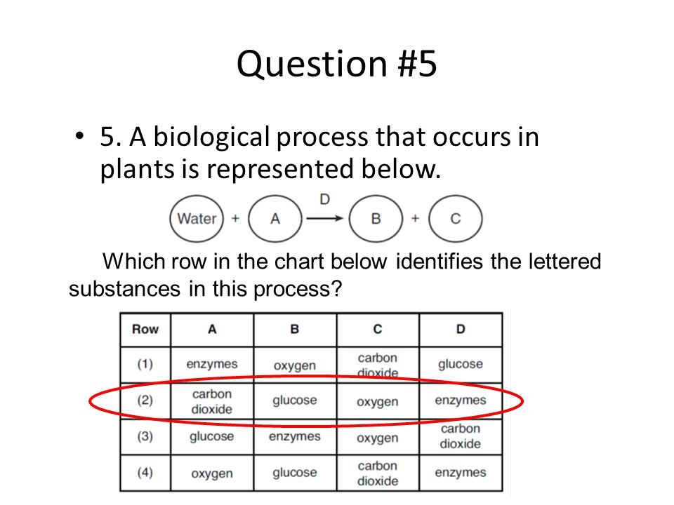 Question #5 5. A biological process that occurs in plants is represented below.