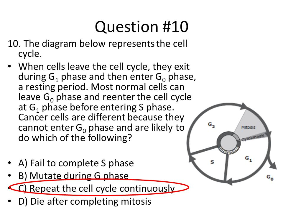 Question #10 10. The diagram below represents the cell cycle.