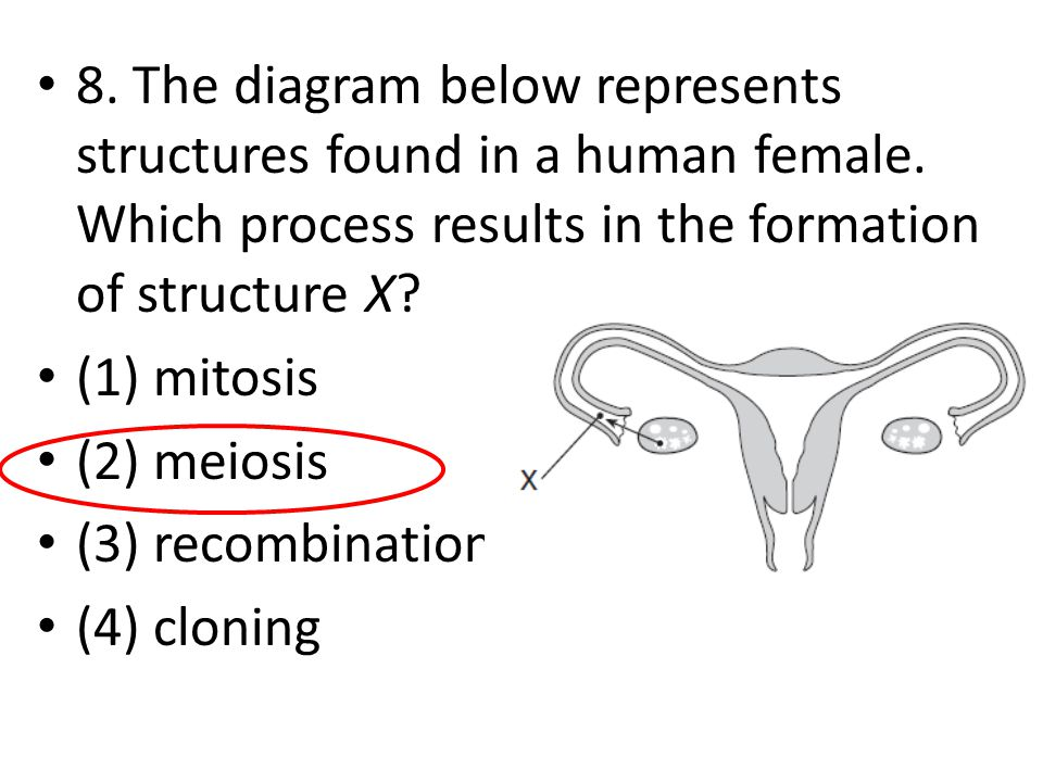 8. The diagram below represents structures found in a human female