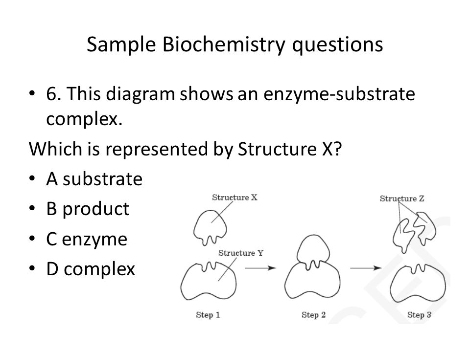 enzymes and substrates relationship quizzes