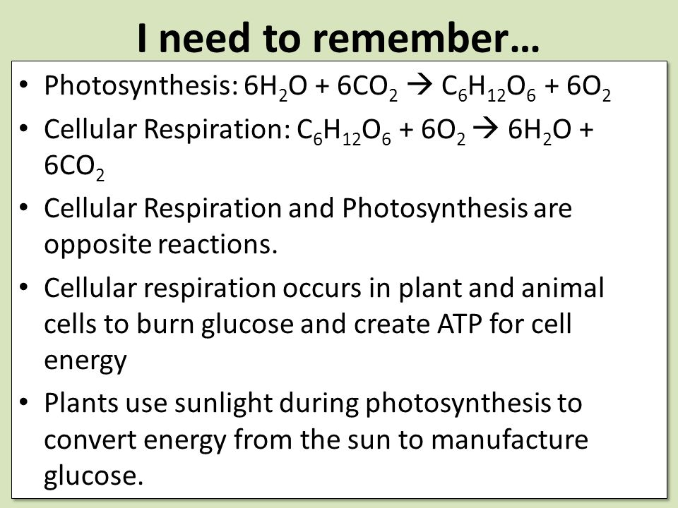 I need to remember… Photosynthesis: 6H2O + 6CO2  C6H12O6 + 6O2