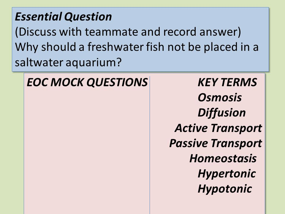 Essential Question (Discuss with teammate and record answer) Why should a freshwater fish not be placed in a saltwater aquarium
