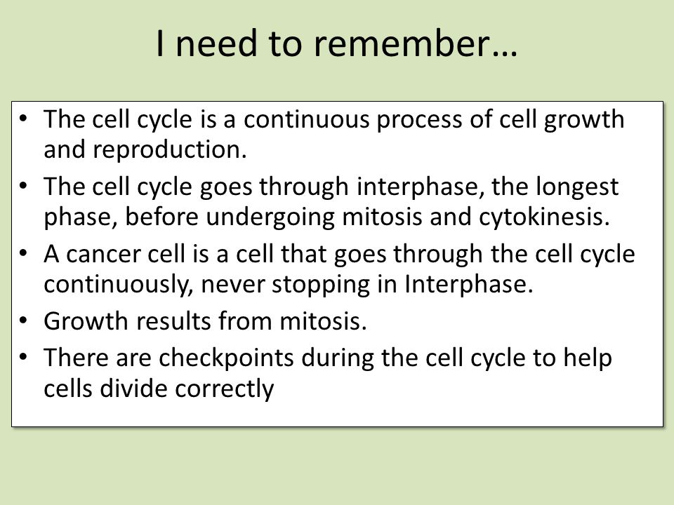 I need to remember… The cell cycle is a continuous process of cell growth and reproduction.