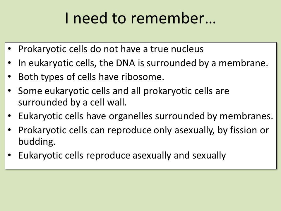 I need to remember… Prokaryotic cells do not have a true nucleus