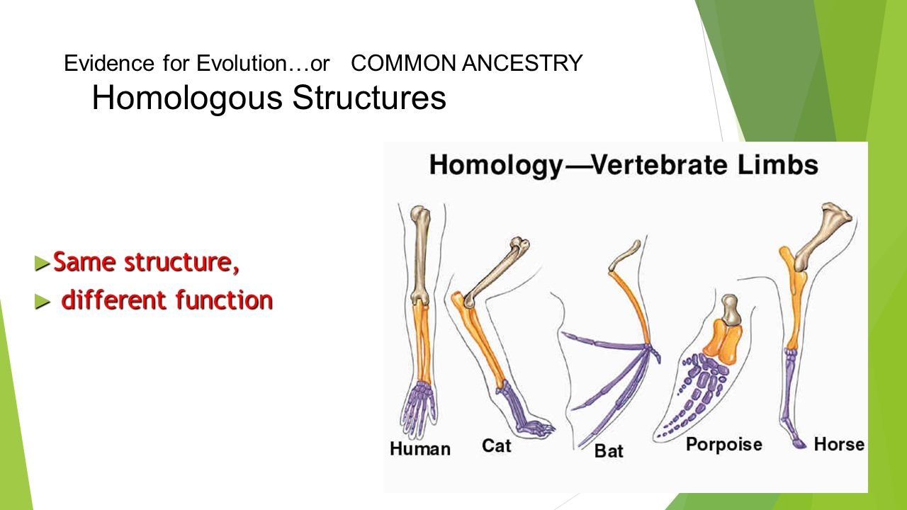 Evidence for Evolution…or COMMON ANCESTRY Homologous Structures