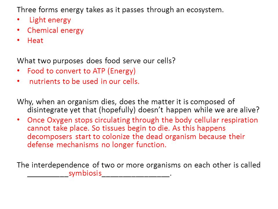 Three forms energy takes as it passes through an ecosystem.