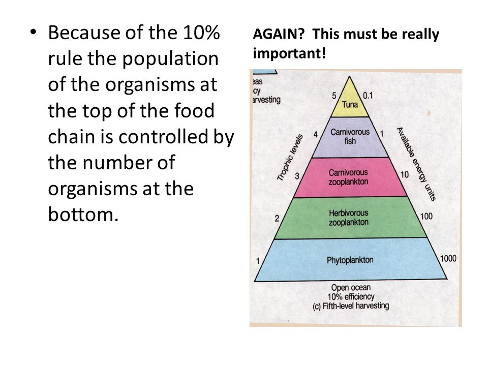 Because of the 10% rule the population of the organisms at the top of the food chain is controlled by the number of organisms at the bottom.
