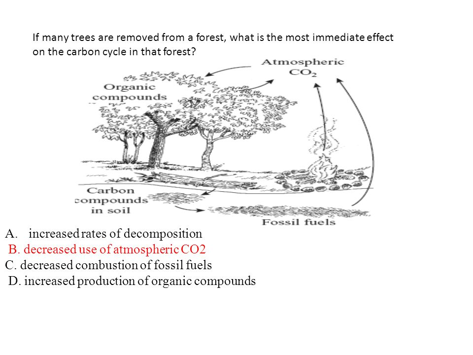 increased rates of decomposition B. decreased use of atmospheric CO2