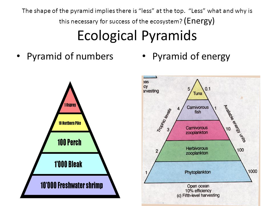 Pyramid of numbers Pyramid of energy