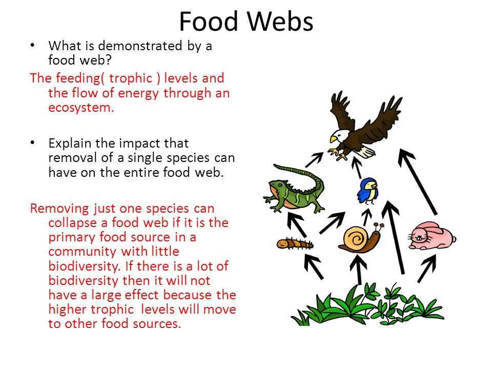 Food Webs What is demonstrated by a food web