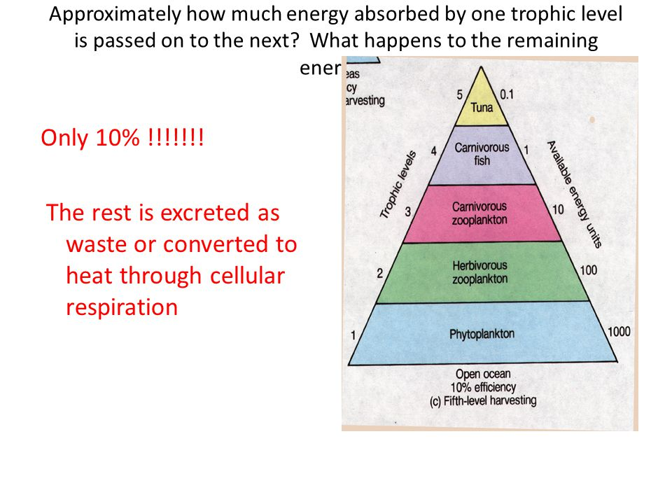 Approximately how much energy absorbed by one trophic level is passed on to the next What happens to the remaining energy
