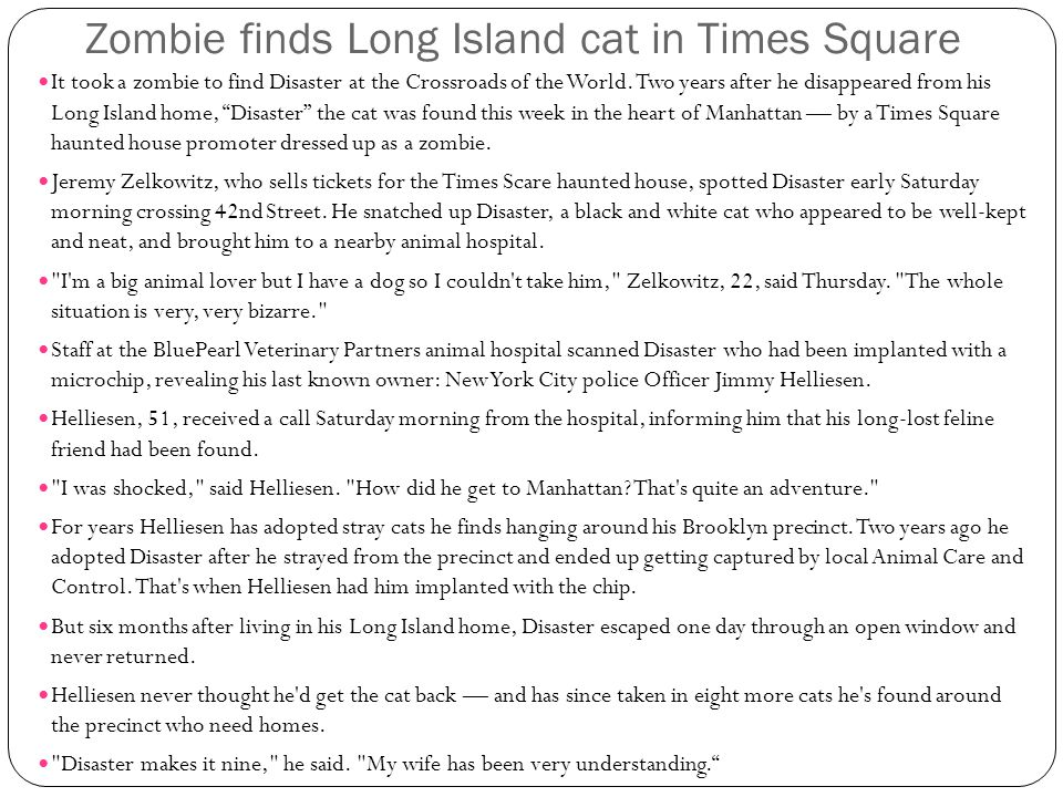 Zombie finds Long Island cat in Times Square