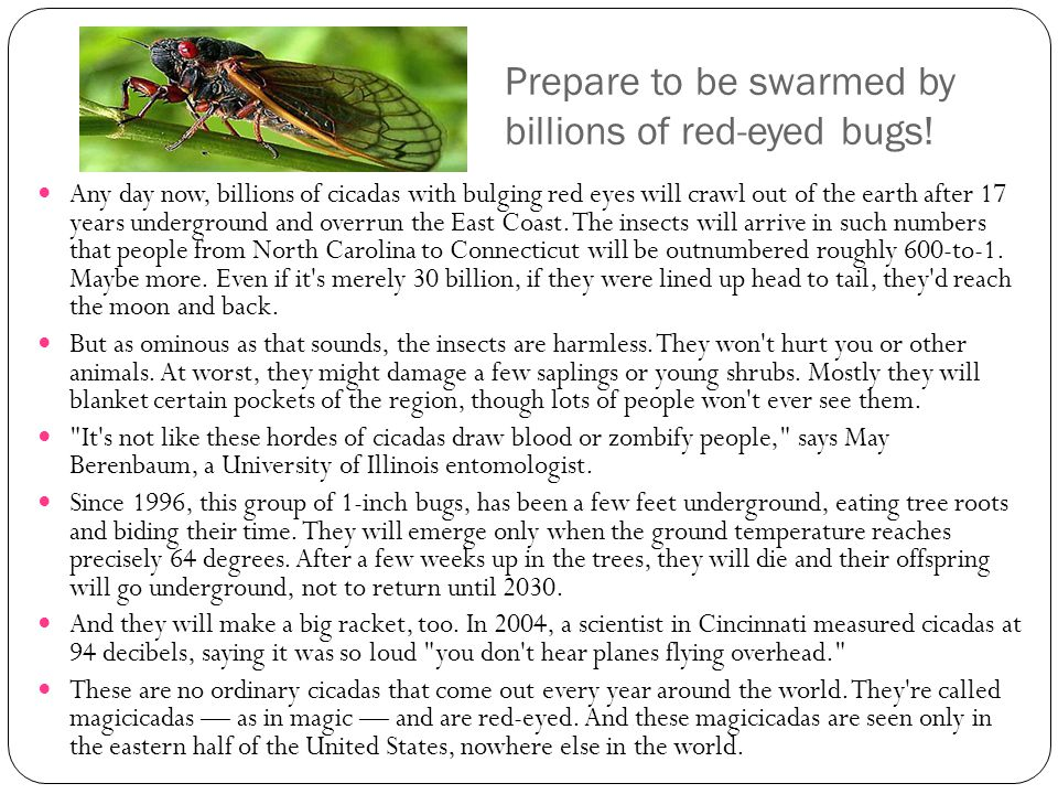 Prepare to be swarmed by billions of red-eyed bugs!