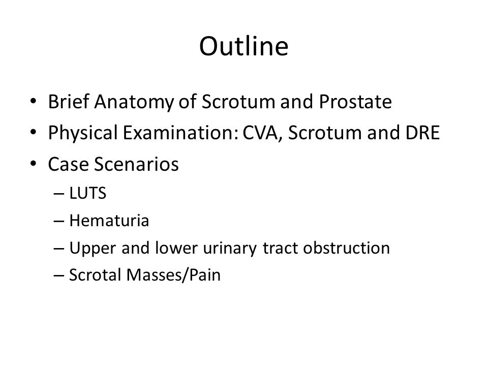 Outline Brief Anatomy of Scrotum and Prostate