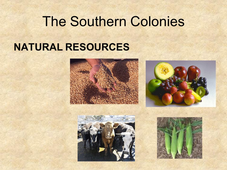 The Southern Colonies NATURAL RESOURCES