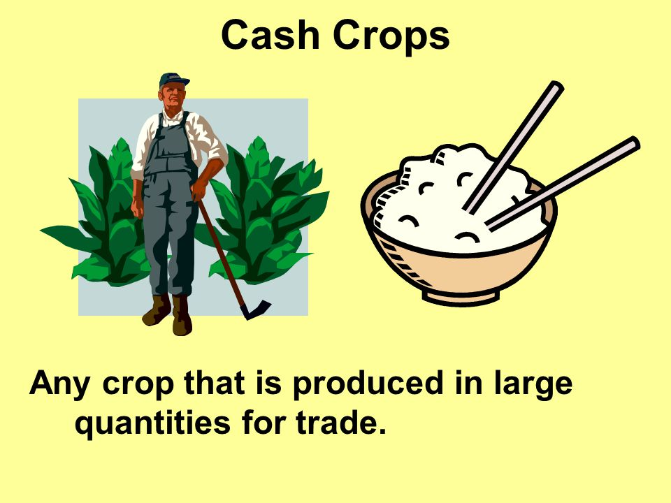 Cash Crops Any crop that is produced in large quantities for trade.