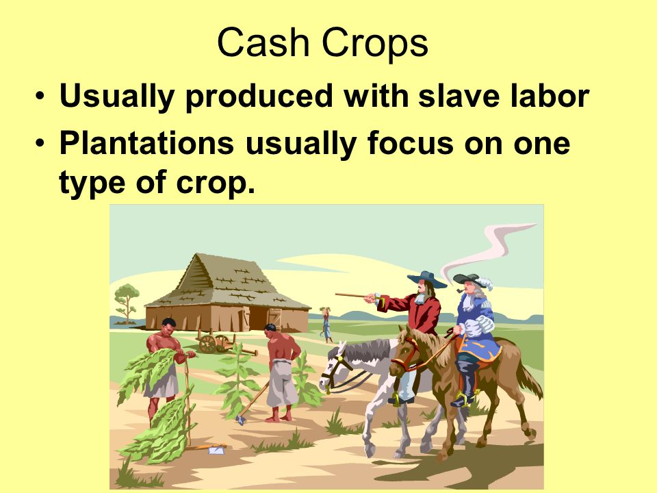 Cash Crops Usually produced with slave labor