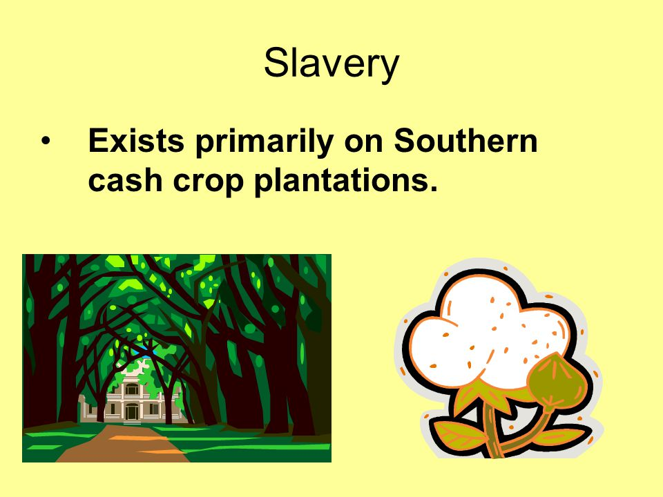 Slavery Exists primarily on Southern cash crop plantations.