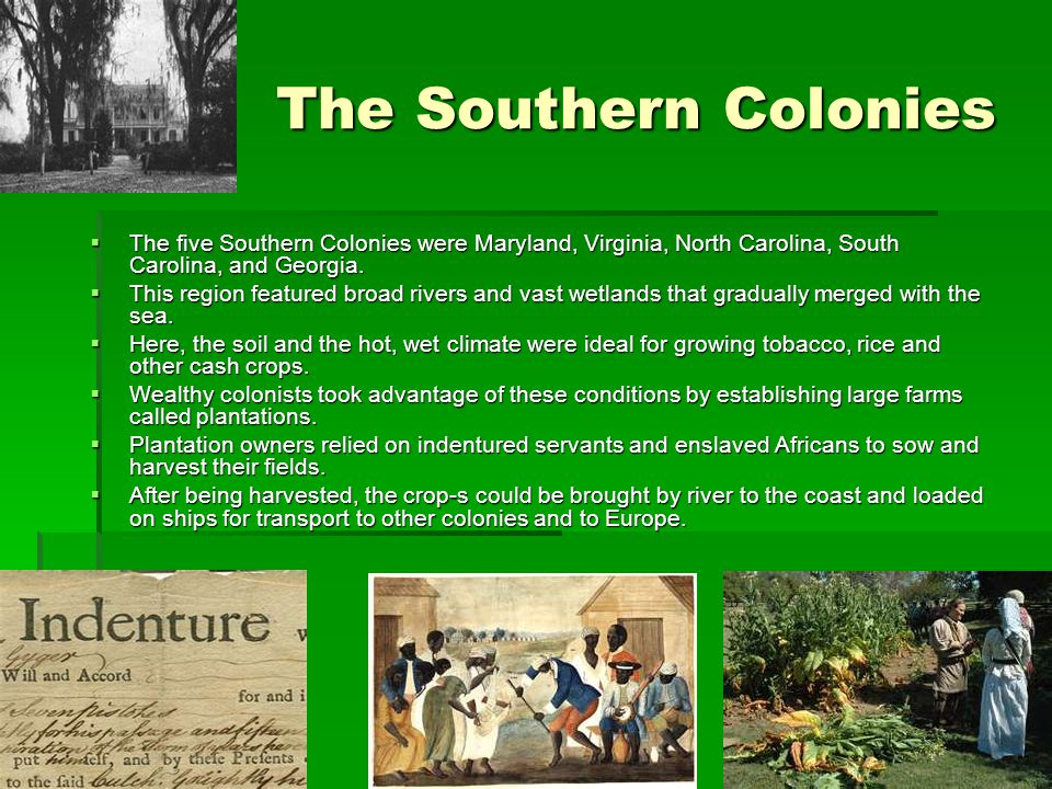 The Southern Colonies The five Southern Colonies were Maryland, Virginia, North Carolina, South Carolina, and Georgia.