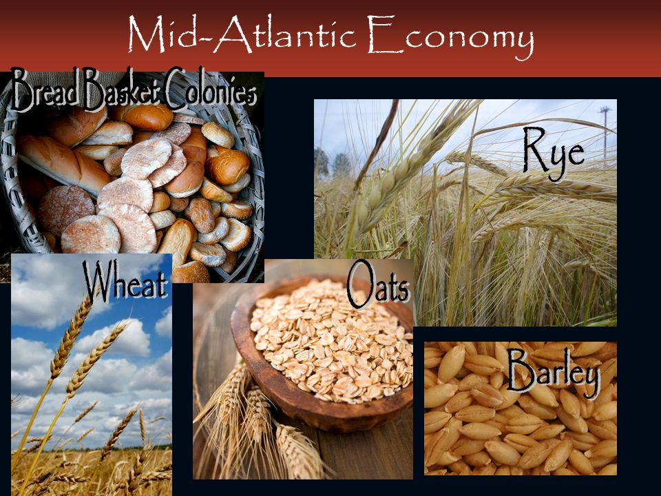 Mid-Atlantic Economy Bread Basket Colonies Rye Wheat Oats Barley