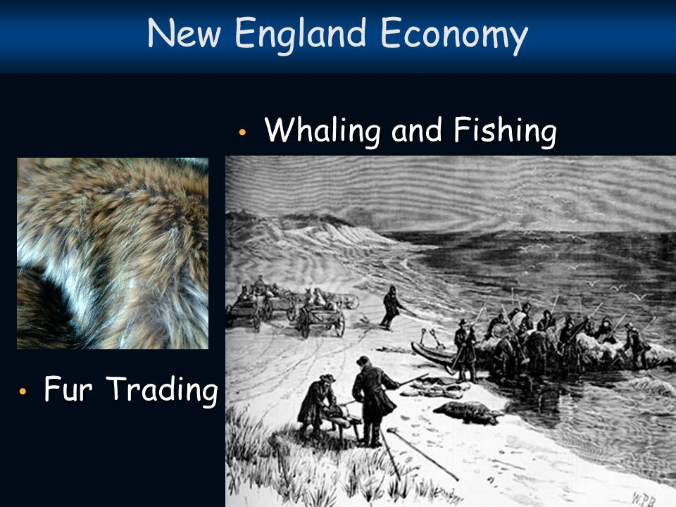 New England Economy Whaling and Fishing Fur Trading
