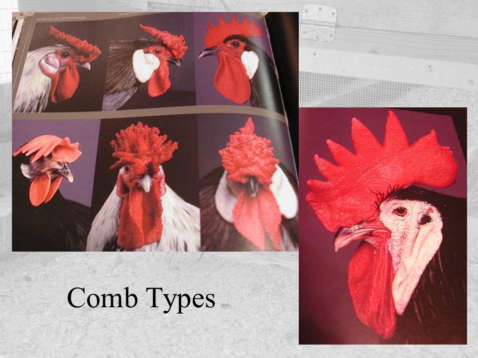 Comb Types