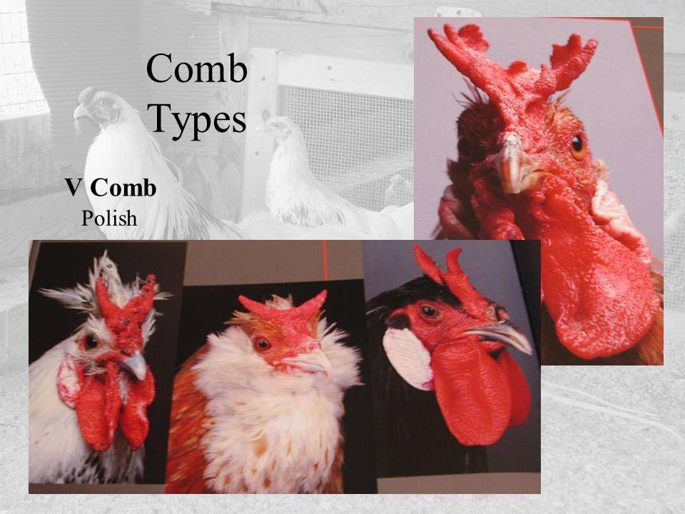 Comb Types V Comb Polish